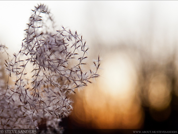 winter_grass_at_sunset